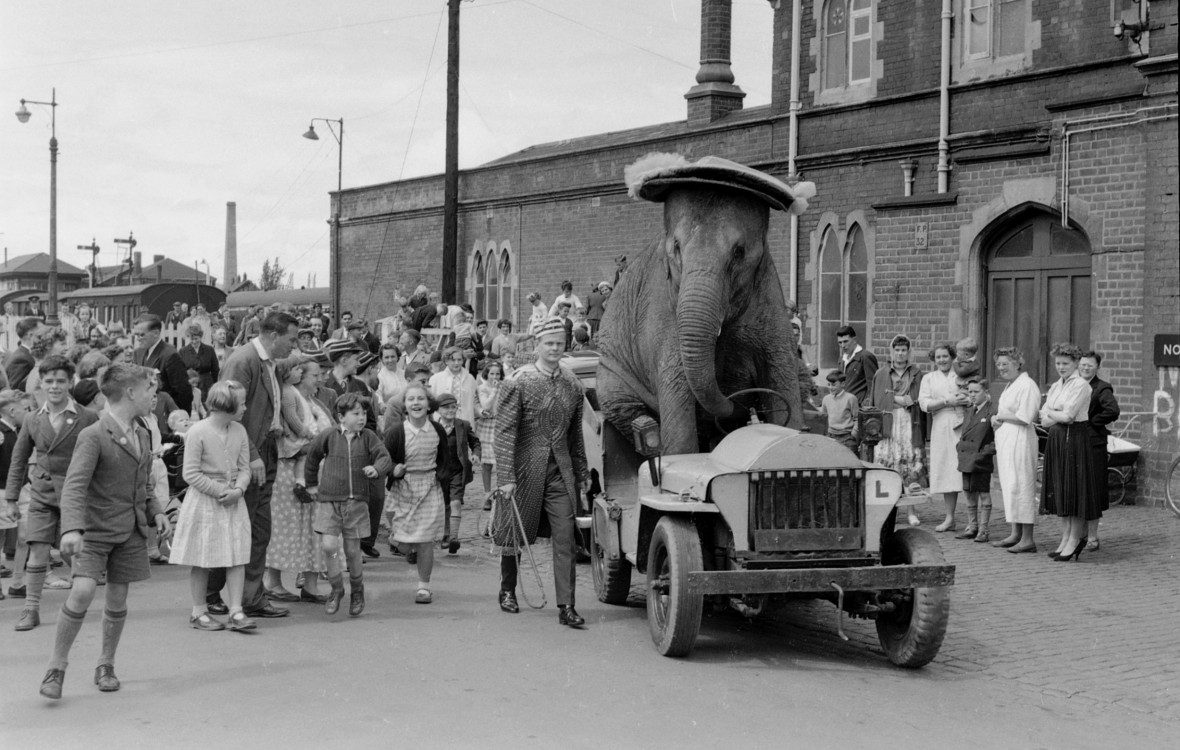 People turn out for the spectacle of an elephant in a car at Bertram Mills