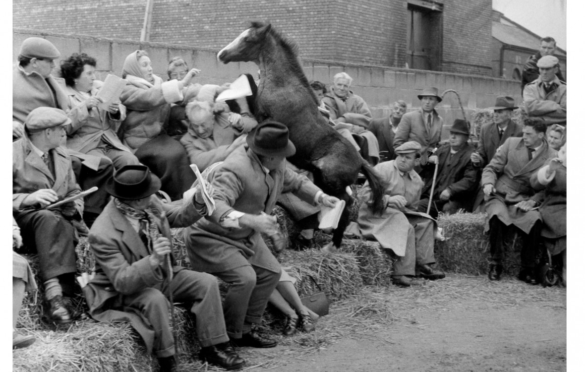 Welsh Pony makes a break for it at a Livestock Show