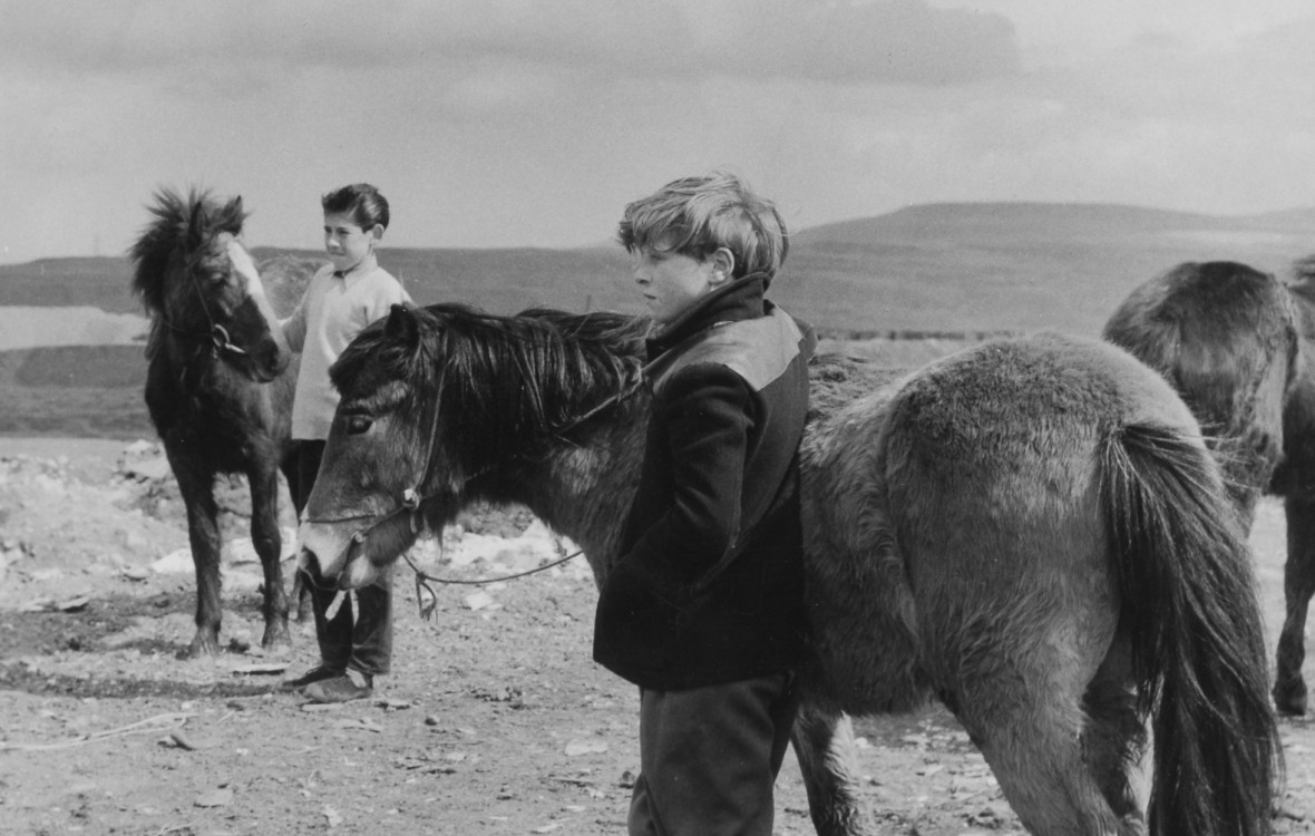 Welsh Boys and Welsh Mountain Ponies