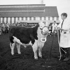 Annual Bull Show and Sale 24 January 1972